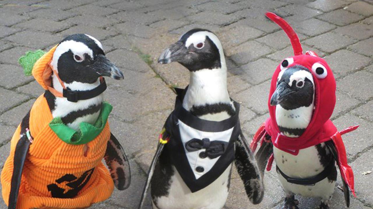 penguinsofficialhockey